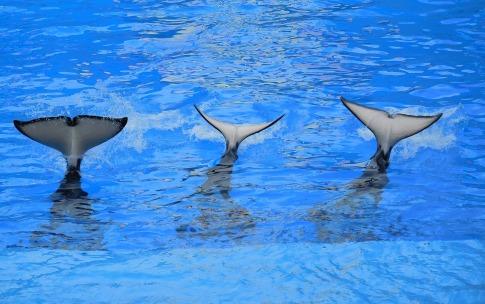 orcas-1263077_1920